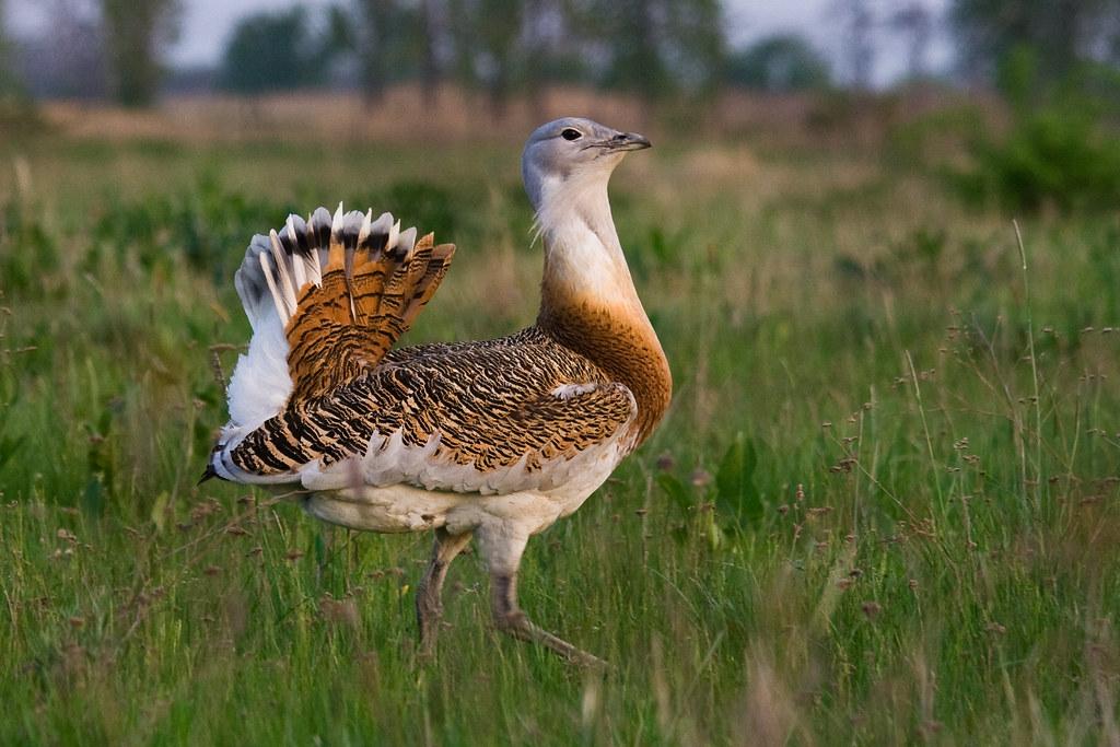 La Campiña del Jarama, una zona de gran valor ornitológico