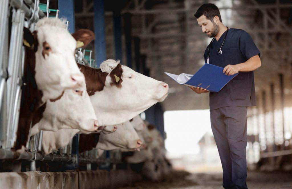 Las clínicas veterinarias. Un trabajo fundamental pero invisibilizado